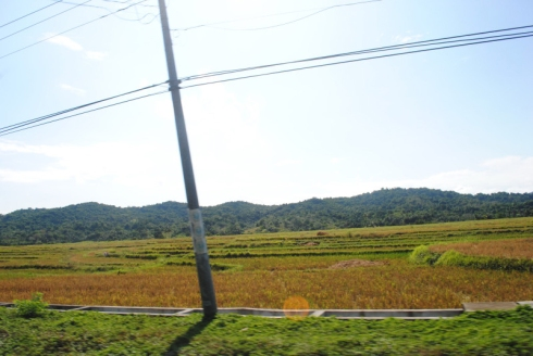 Endless fields of Cagayan.